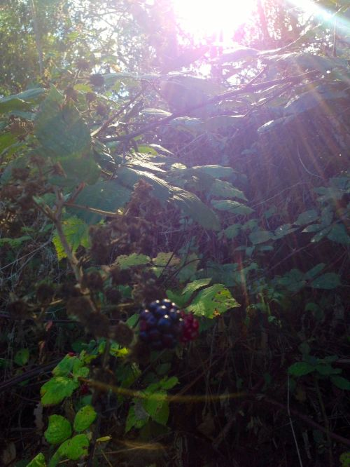 let there be berries